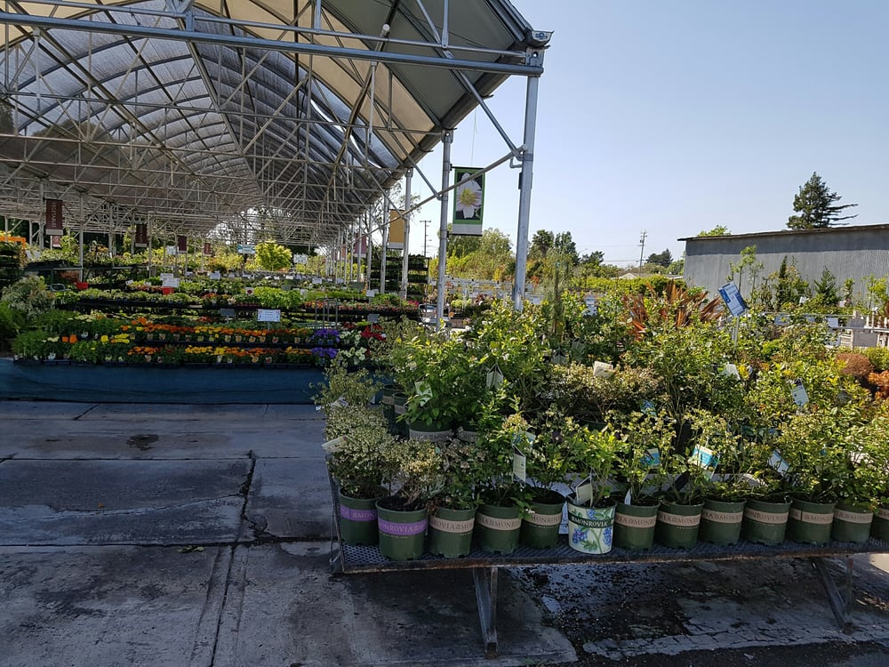 Mid City Nursery: 3635 Broadway St, American Canyon, CA