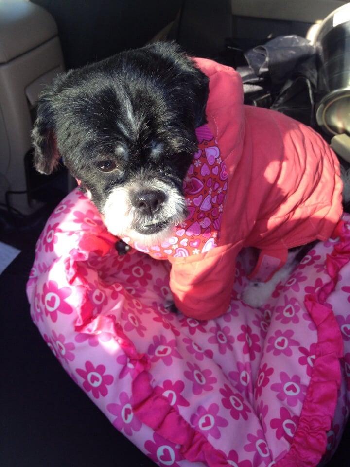 Goldleaf Dog Grooming: 605 Hamlin Hwy, Hamlin, PA