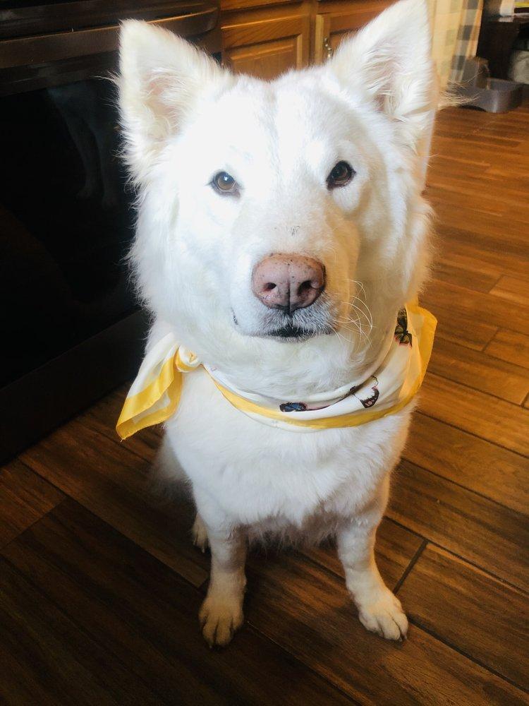 Dog In Suds: 46 E Palatine Rd, Palatine, IL