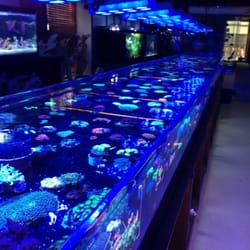 Manhattan Aquariums 102 Photos 45 Reviews Aquarium
