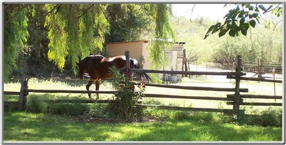 Date Creek Ranch: Wickenburg, AZ