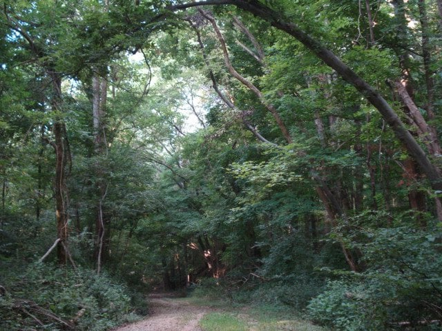 Harmonie State Park: 3451 Harmonie State Rd, New Harmony, IN