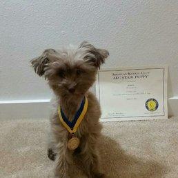 Neener S Professional Dog Training Get Quote Pet