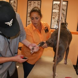 Clip Shoppe School Of Dog Grooming 37 Photos Vocational