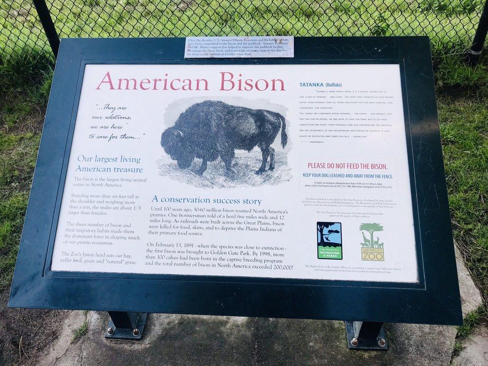 Golden Gate Park Bison: John F Kennedy Dr & Chain of Lakes Dr E, San Francisco, CA