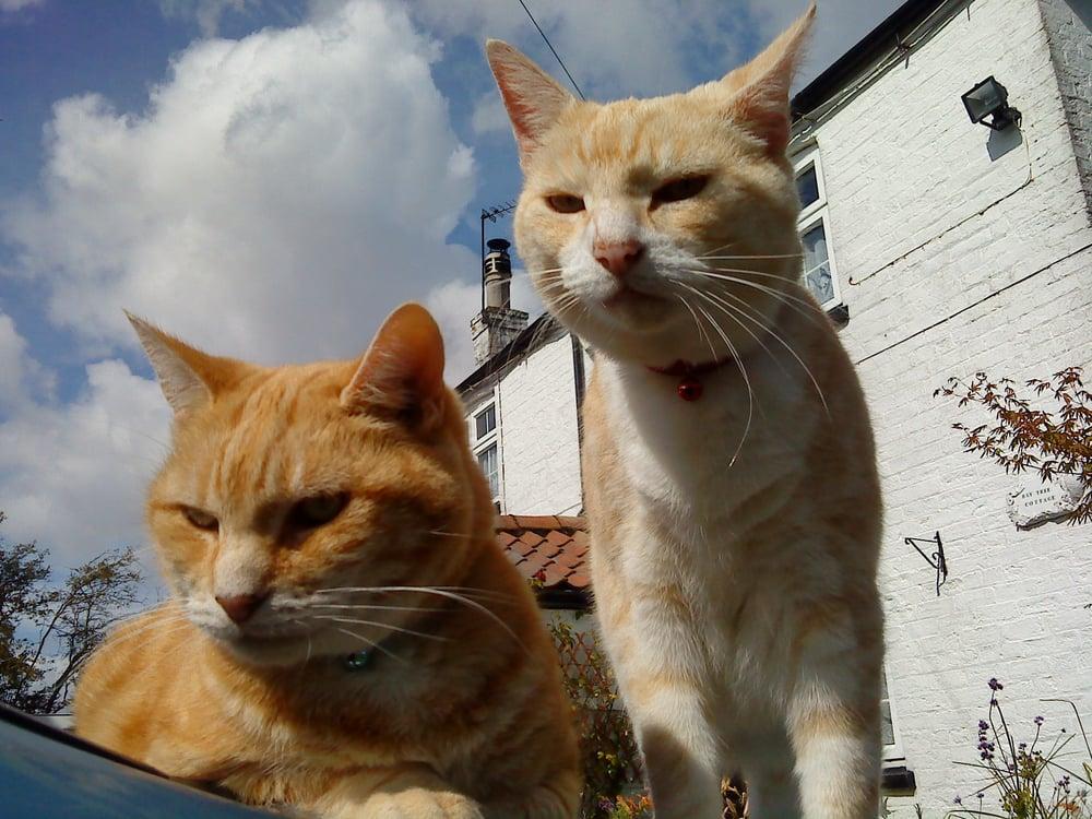 Haworth Cat Rescue