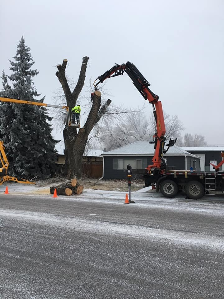 Rocky Mountain Tree Care Specialists: 3001 Barley Ln, Great Falls, MT