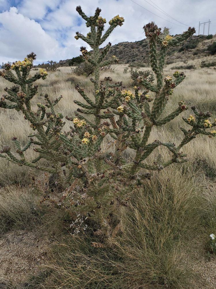 Aluminum Yucca: 100 Camino De La Sierra NE, Albuquerque, NM