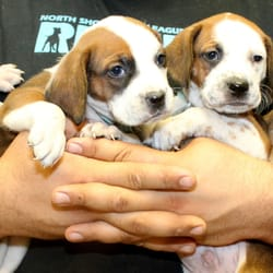 List of Synonyms and Antonyms of the Word: north shore animal league
