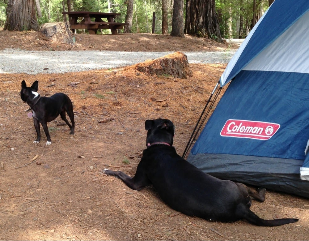 Ramshorn Campground: Hwy 49, Downieville, CA