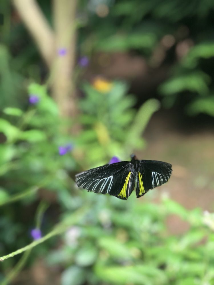 The Butterfly Place: 120 Tyngsboro Rd, Westford, MA