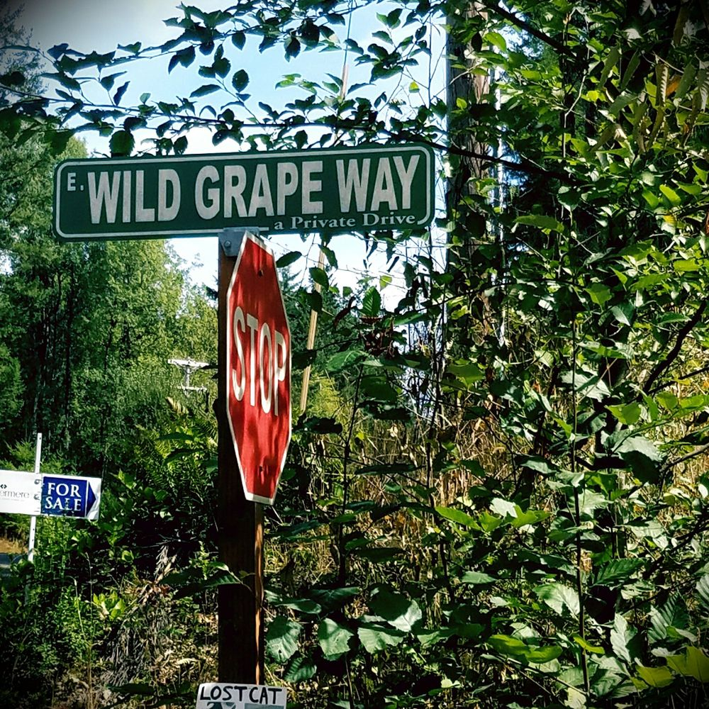 North Bay Kayake & Kones: 18350 E State Rt 3, Allyn-Grapeview, WA