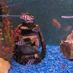 Photo Of Trop Aquarium Las Vegas Nv United States Fontosa Cichlids