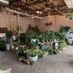 Photo Of Oasis Plant Dallas Tx United States