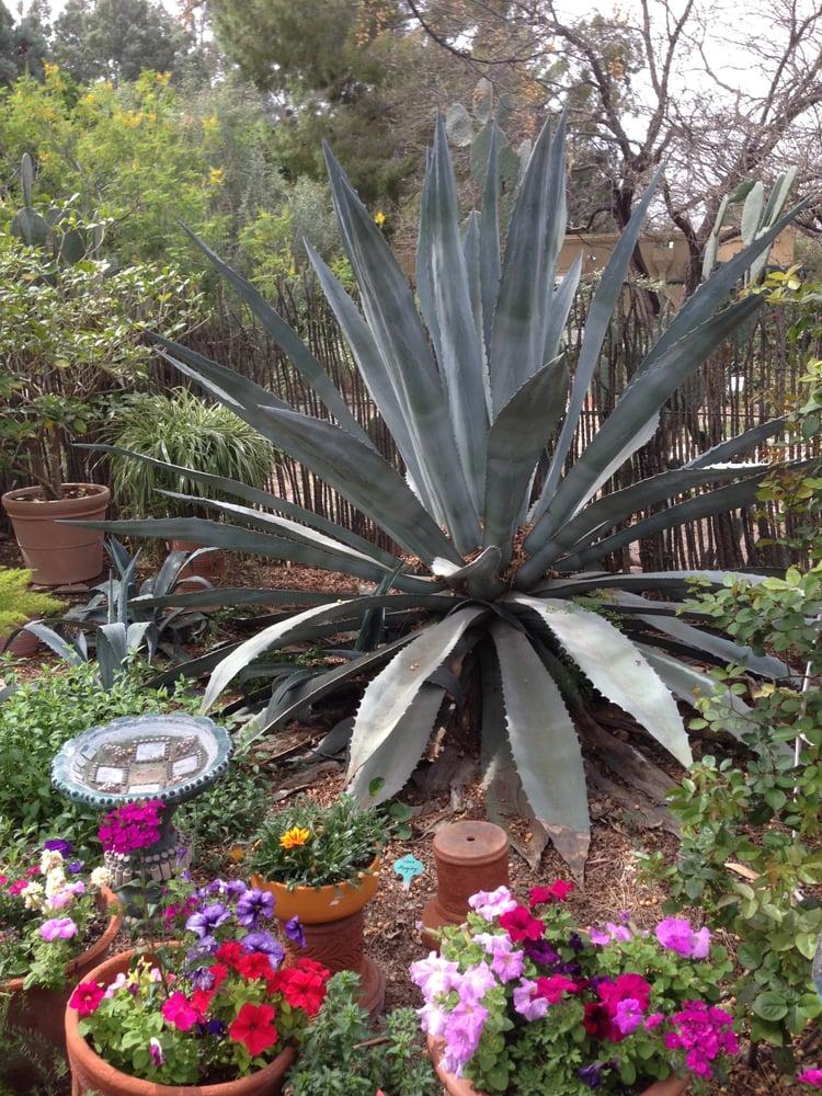 Photos For Tucson Botanical Gardens Yelp
