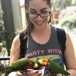 Photo of Busch Gardens Williamsburg - Williamsburg, VA, United States. Parakeet sanctuary -