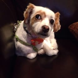 The Puppy Cut 11 Photos Pet Groomers 511 E Genesee St
