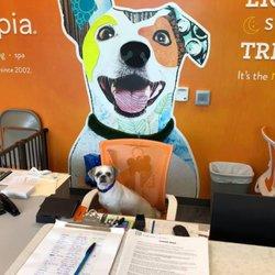 Dogtopia - Northville - 21 Photos - Pet Boarding - 20510