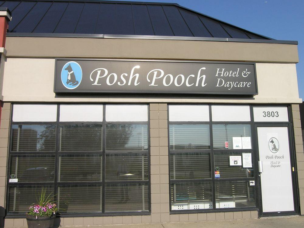 Posh pooch 11 reviews pet sitting 3803 99 street for Kitchen cabinets 99 street edmonton