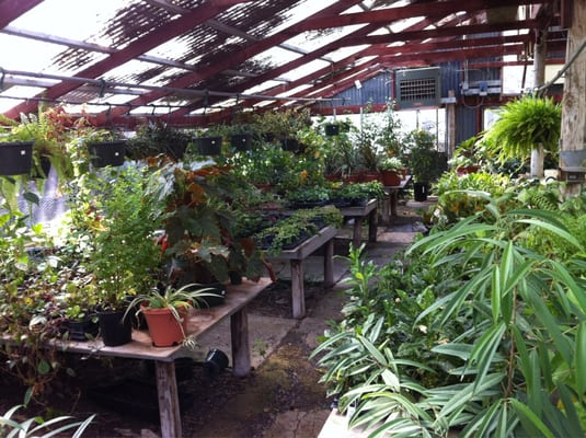 Fanicku0027s Garden Center 1025 Holmgreen Rd San Antonio, TX Florists   MapQuest