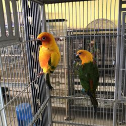The Amazon Pet Store - Pet Stores - 2936 Del Prado Blvd