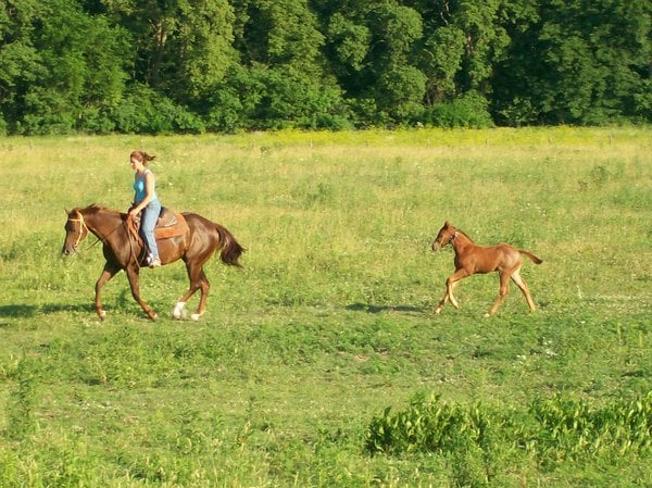 Double H Horse Farm: 5605 W 500th S, Westpoint, IN