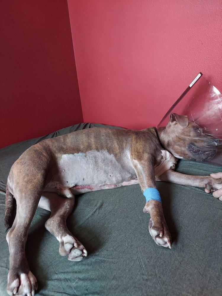 Salem Veterinary Emergency Clinic