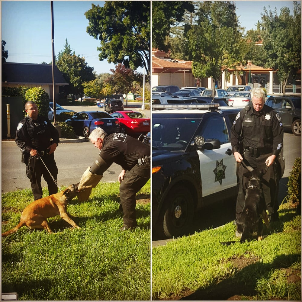 walnut creek police department - 37 reviews - police departments