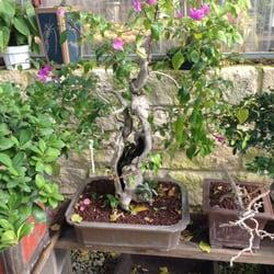 Plant Nursery Arlington Tx Thenurseries