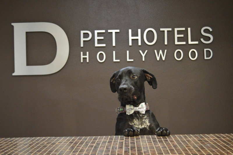 D pet hotels hollywood 45 foto e 122 recensioni for Dog hotels los angeles