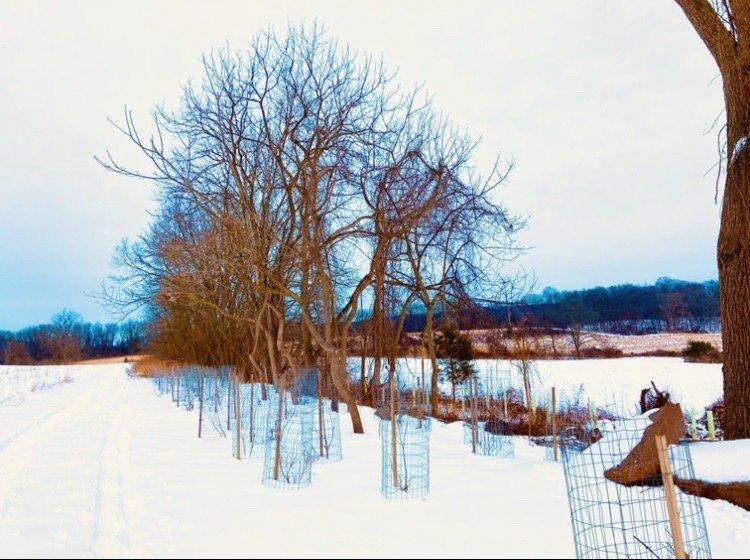 Green Hills Preserve - Natural Lands: 553 Gunhart Rd, Mohnton, PA