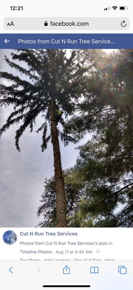 Cut N Run Tree Service: Finleyville, PA
