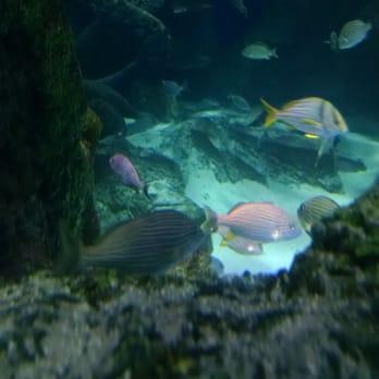 Sea Life Charlotte Concord Aquarium 190 Photos 69