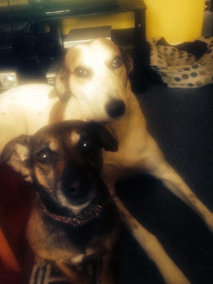 Dog Rescue Wokingham