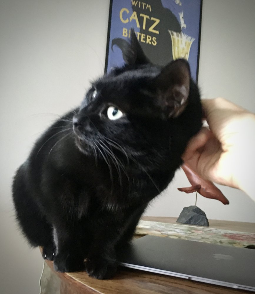 Kitty Care Cat Sitting: Cambridge, MA