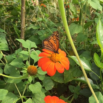 Delicieux Photo Of Marku0027s Lawn U0026 Garden   Bridgton, ME, United States. Butterflies At
