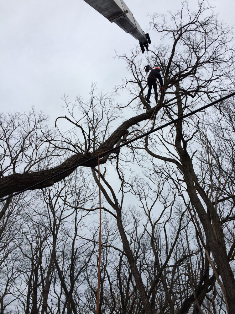 Great Lakes Tree Services: 5540 Fenner Rd, Sinclairville, NY