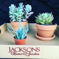 photo of jacksons home garden dallas tx united states succulents - Jacksons Home And Garden