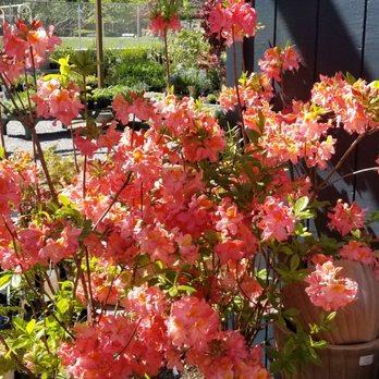 Photo Of The Florist At Moana Nursery Reno Nv United States Sunshine