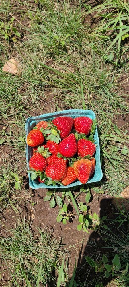 Harvest Hill Farm Market: 12918 S State Hwy 16, Fredericksburg, TX