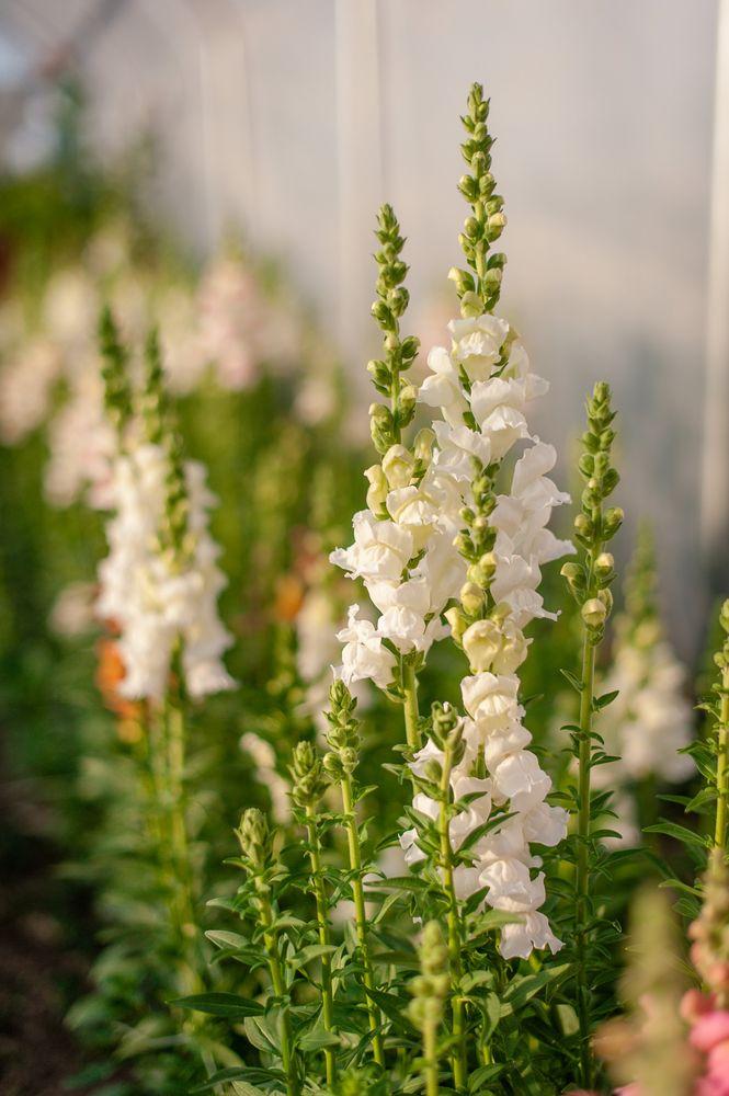 Miss Aliss Blooms: A Flower Farm: 29060 County Rd 388, Kersey, CO