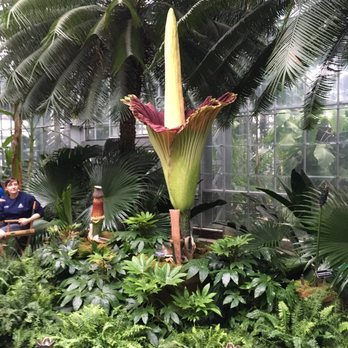 Photo Of United States Botanic Garden   Washington, DC, United States. The  Corpse