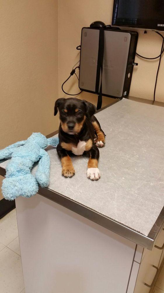 Animal Hospital of the Sierra: 40637 Hwy 41, Oakhurst, CA