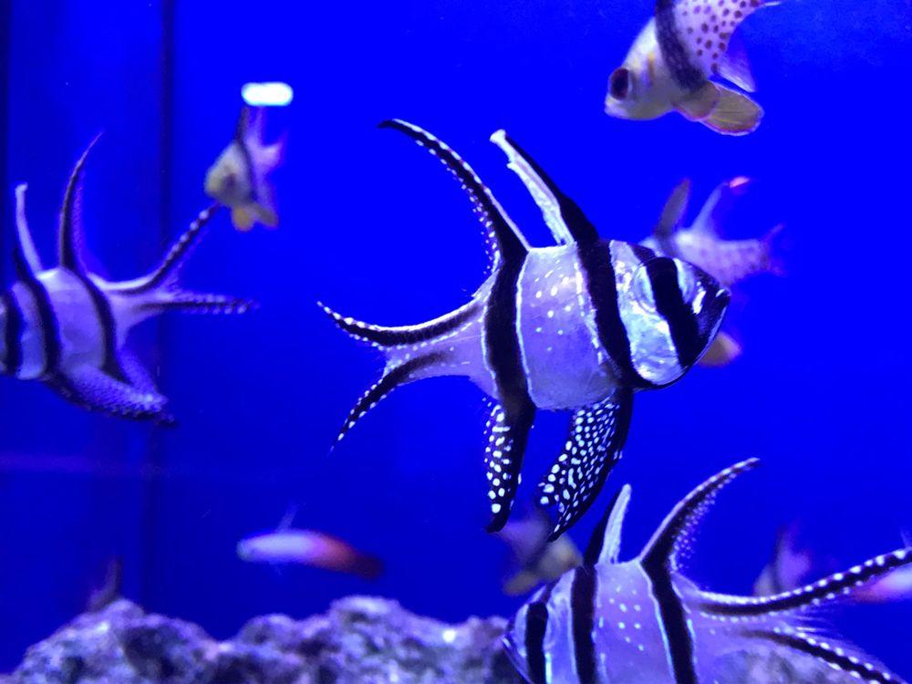 Aquariums Unlimited
