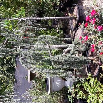 Photo Of Waltonu0027s Lawn U0026 Garden Center   Dallas, TX, United States. Glauca