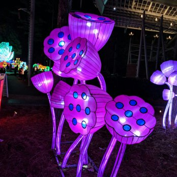 Chinese Lantern Festival - (New) 271 Photos & 41 Reviews