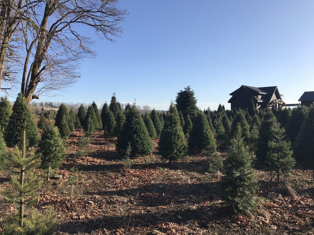 Hedlund Christmas Trees: 266 Middle Satsop Rd, Montesano, WA