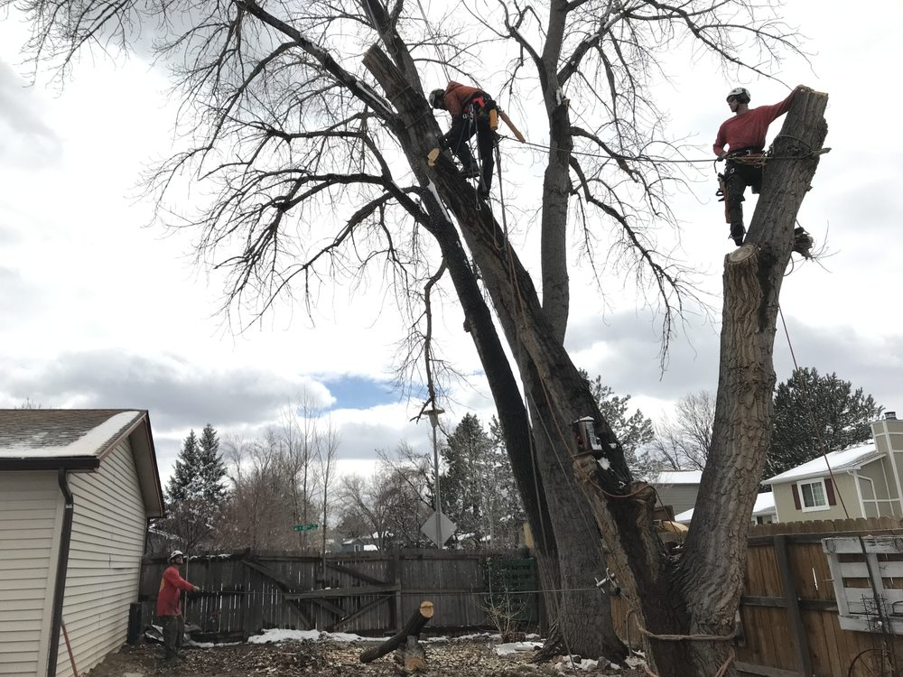 Good People Tree Service: Boulder, CO