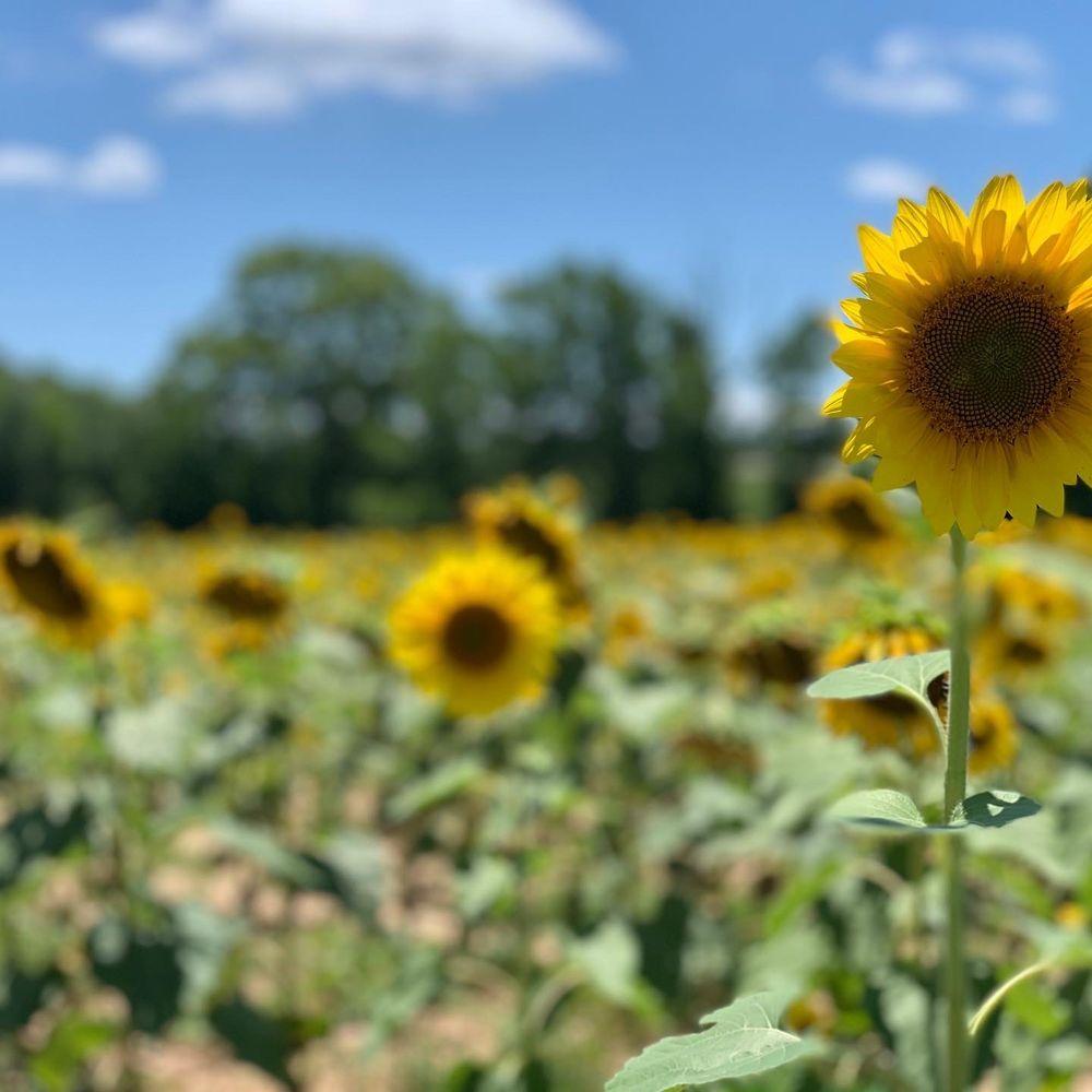 Sol Flowers of Anderson: 150 Bradley Rd, Anderson, SC