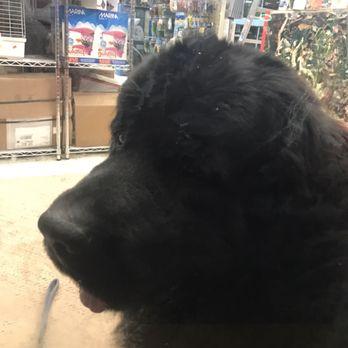 The Pet Shop 32 Photos 85 Reviews Pet Stores 165 Harvard Ave